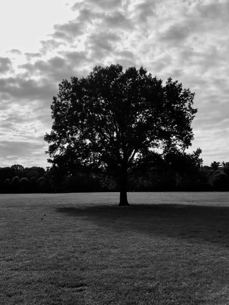 Mittagspausenbaum SW