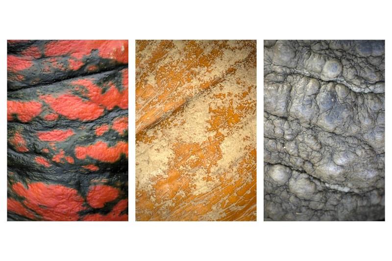Triptychon vom Kürbis