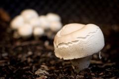 kann man die essen? sie wachsen ungefragt in unserem Hochbeet :)