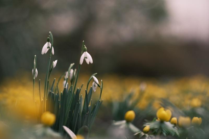 Es wird Frühling?