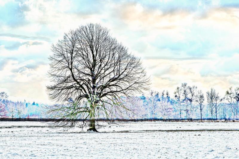 mein Baum im Winter