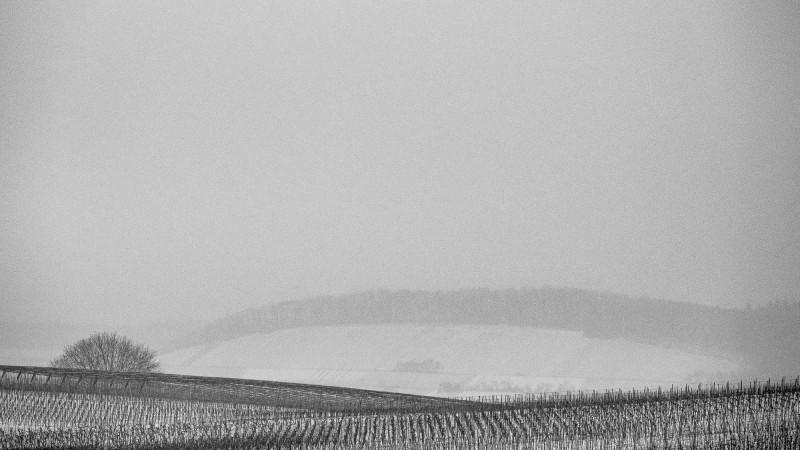 Schneetreiben im Weinberg