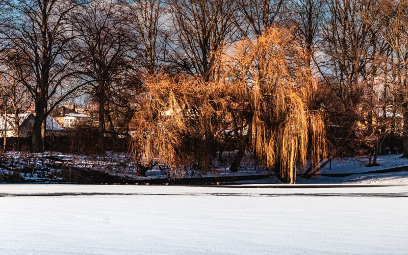 Goldener Winter