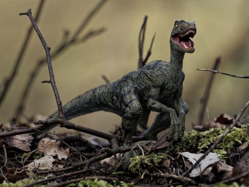 Raptor Habitat