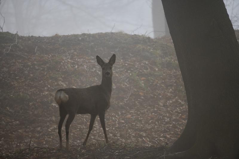 nicht allein im Wald