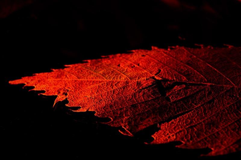 Das rote Blatt