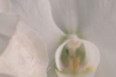 Zweierlei von der Blüte