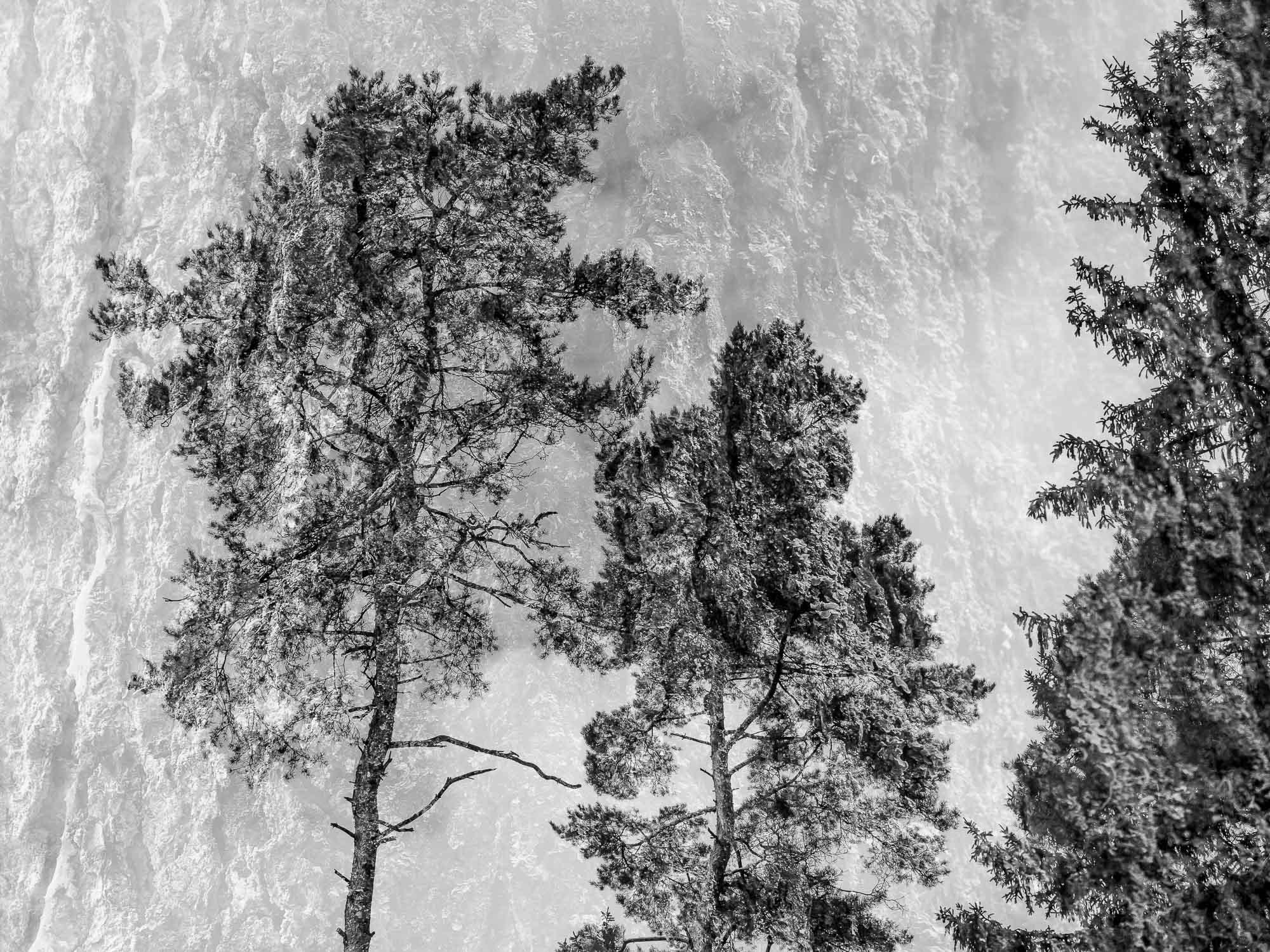 Doppelbelichtung im Wald