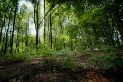 Naturwald in Herten