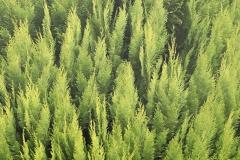 Einbaumwald