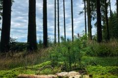 Miniwald