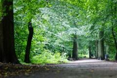 tief im Wald wartet der Wolf