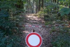 Immer wenn ich in den Wald will!