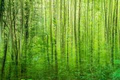 Wald (Doppelbelichtung)