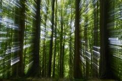 Im Hyperwald