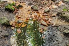 Eisenquelle im Teutoburger Wald