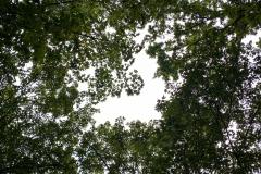 Ich glaub ich steh im Walde
