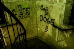 rosina/Doge such vandalism
