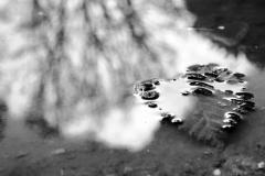 Blatt und Baum vereint