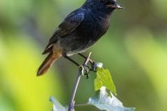 Der frühe Vogel fängt den Wurm und sitzt dann im natürlichen Licht auf dem schrägen Ast