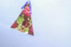 lexx_photo / Himbeeren im Dreieckdii