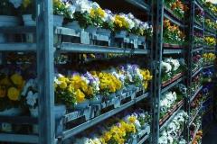 Silke Industrieblumen