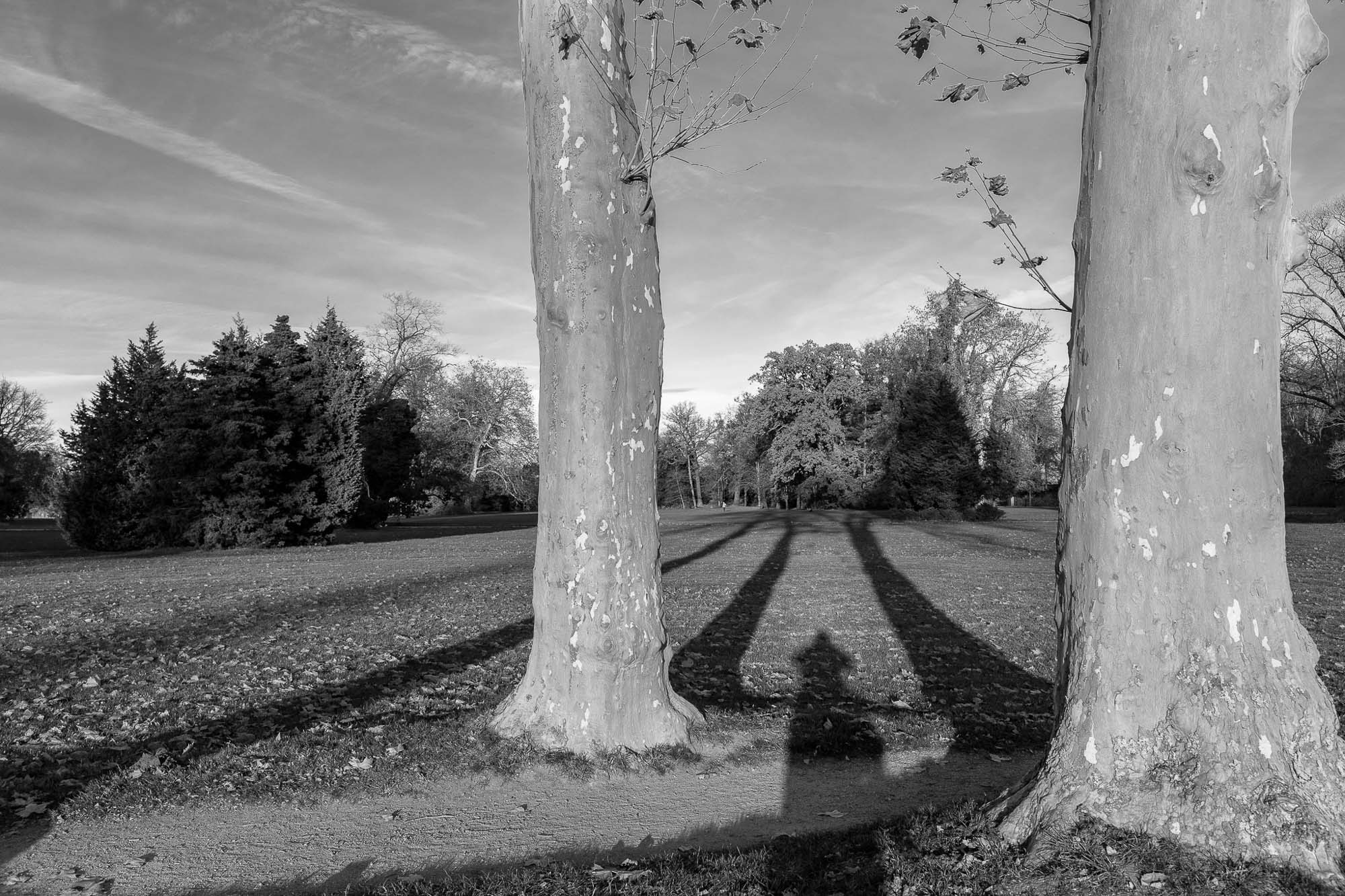 Baum Schatten