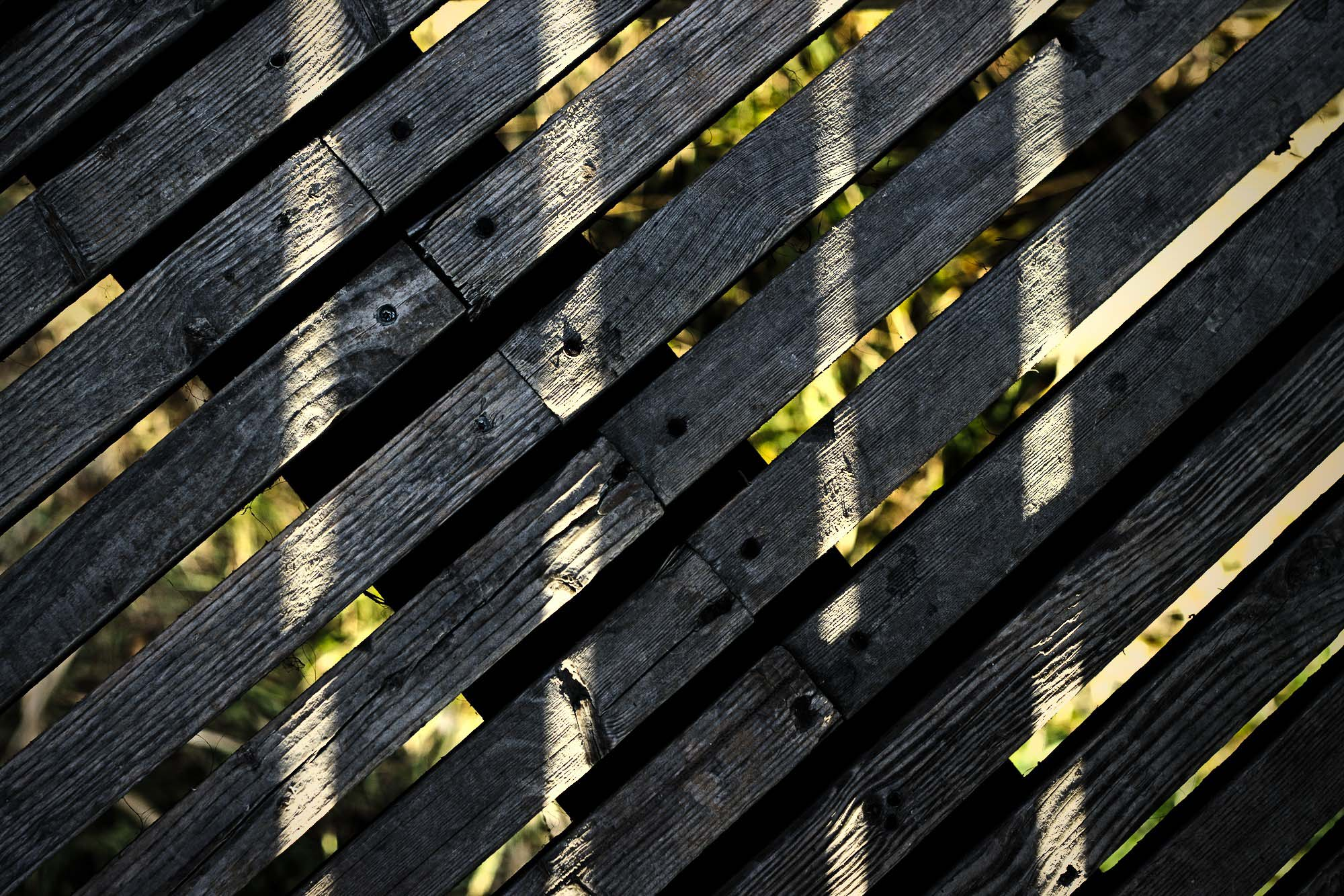 Lines in Wood