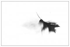 ruebyi / Blatt im Wind