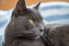 babblfisch / Wohl dem der eine Katze hat