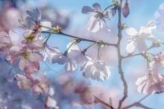 phonsography / endlich Frühling