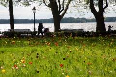 dagmar/ Blumenwiese