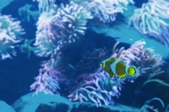 eszett / Nemo