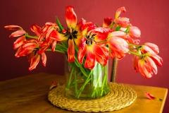 ollo / Tulpen 10 Minuten vor dem Rauswurf