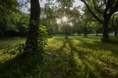 expresskasse / Morgens im Park