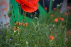 phonsography / Urban Gardening