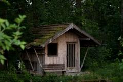 lexx_photo / Allein im Wald