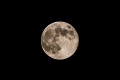 adidelaplaya / Hase im Mond