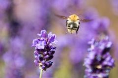 adidelaplaya / Kooperationsmangel der Bienenmodels