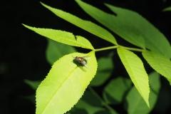 1:0 Fly:Bumblebee / moni