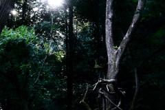 Verwunschener Wald