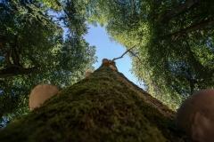 Lumivers / im Wald