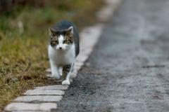 venolab / Katzenjoker