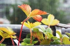 Moni / Sommerregen