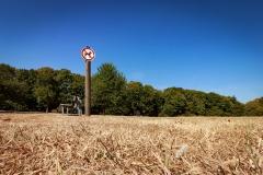 ollo / HImmel, Bäume, Gras und keine Hunde