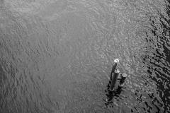 phonsography/Drei im Fluss