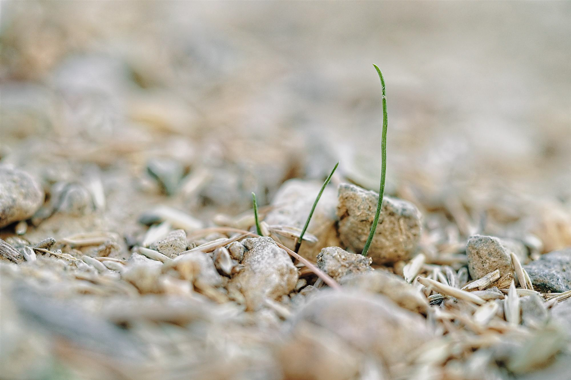 ruebyi / erstes Gras