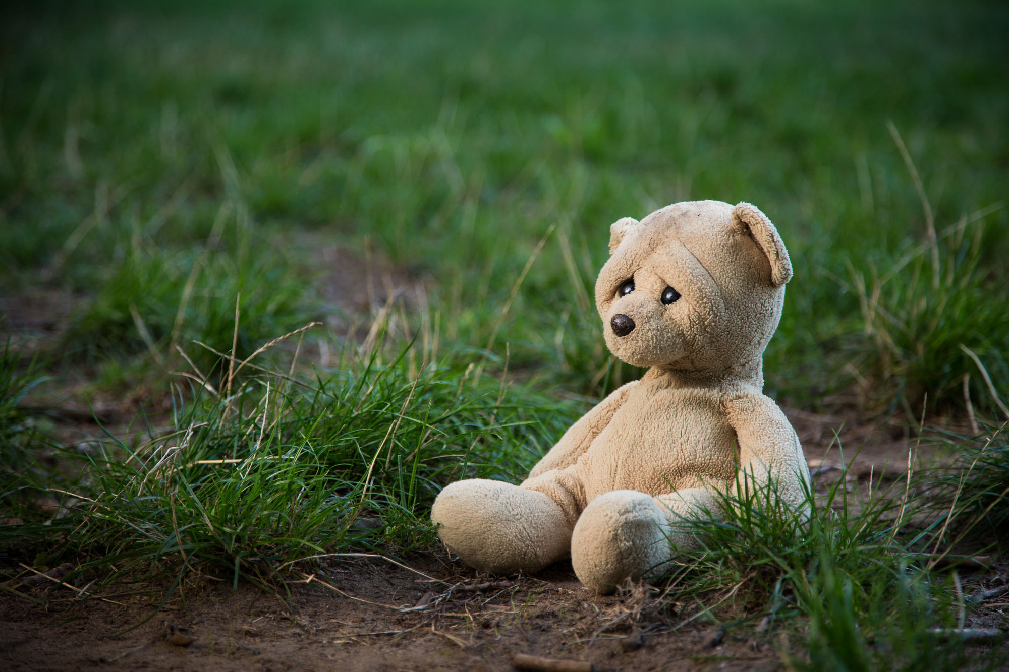 kamerakata / Teddy