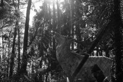 adidelaplaya / Duft der Freiheit