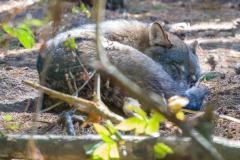 dagmar/ Reservat Schorfheide - Siestra bei Familie Wolf